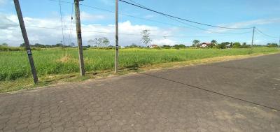 Palm Village #293